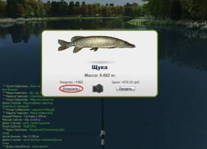 Ответы на частые вопросы - трофейная рыбалка