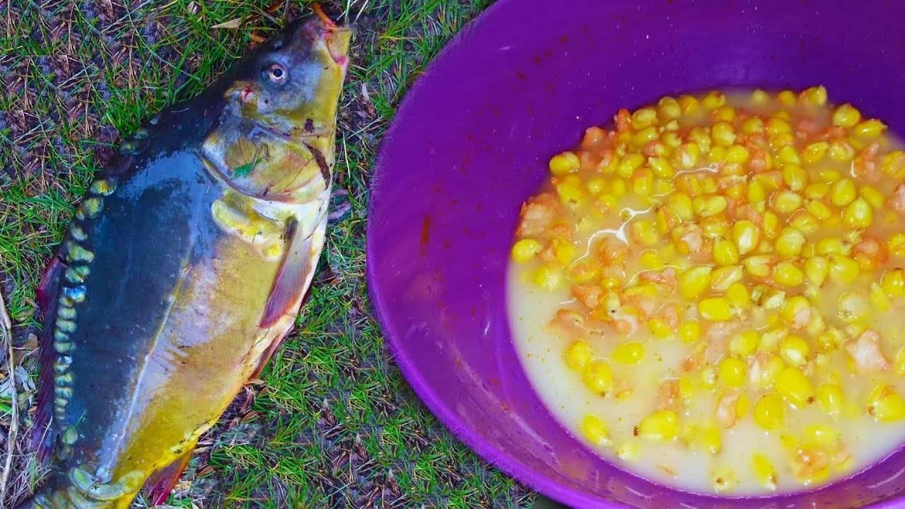 Как приготовить кукурузу для рыбалки на карпа