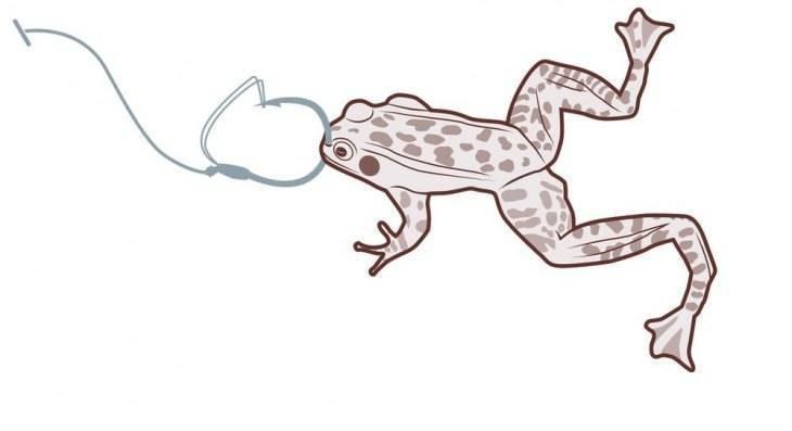 Ловля щуки на живую лягушку и лягушку-незацепляйку - рыба