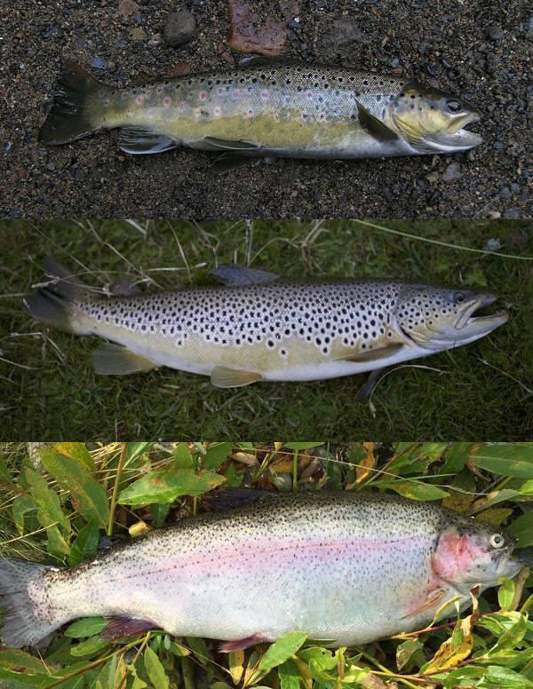 Ловля лосося или семги на спиннинг
