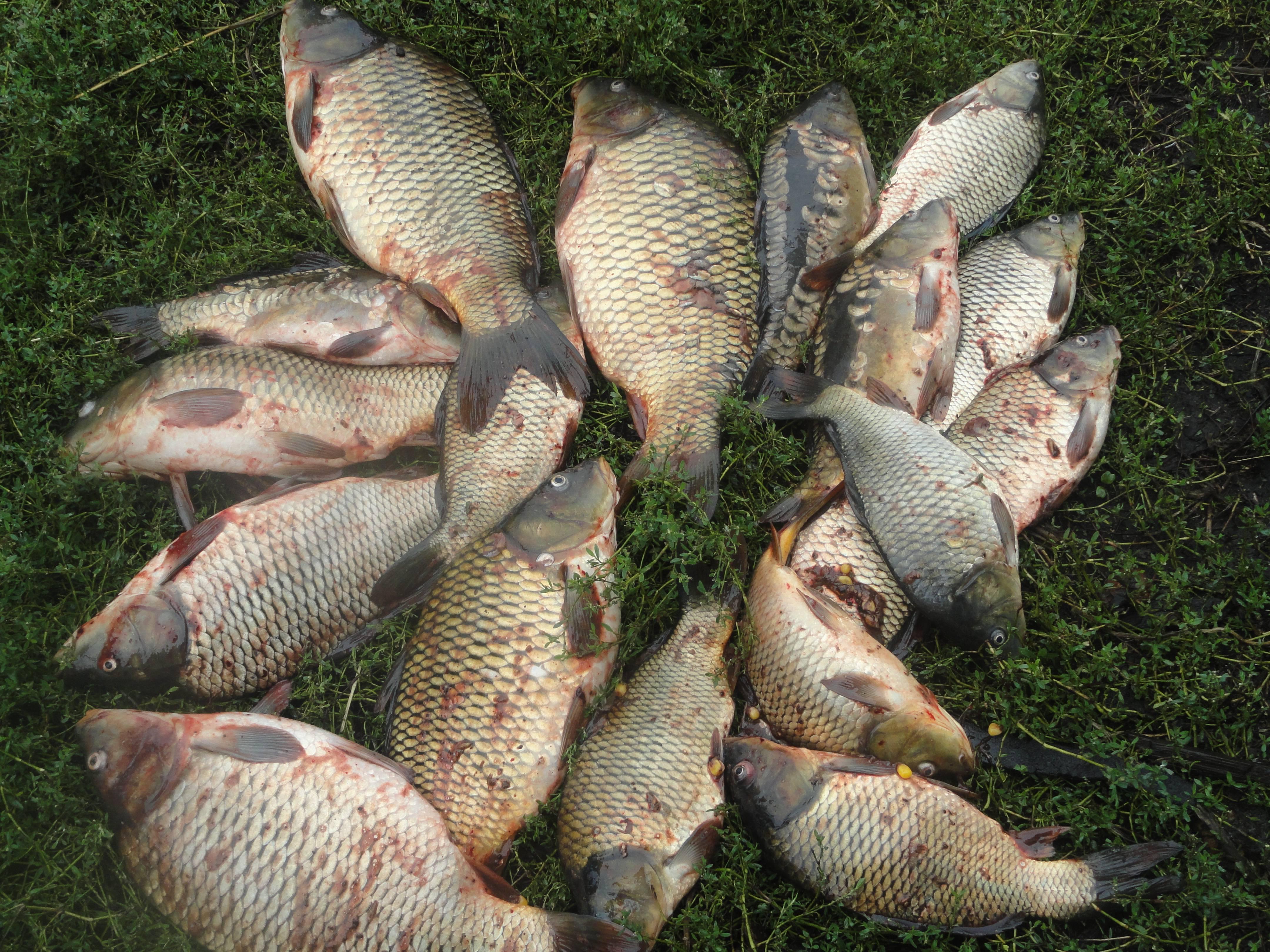 Рыбалка в пензенской области (58) | карта рыболовных мест