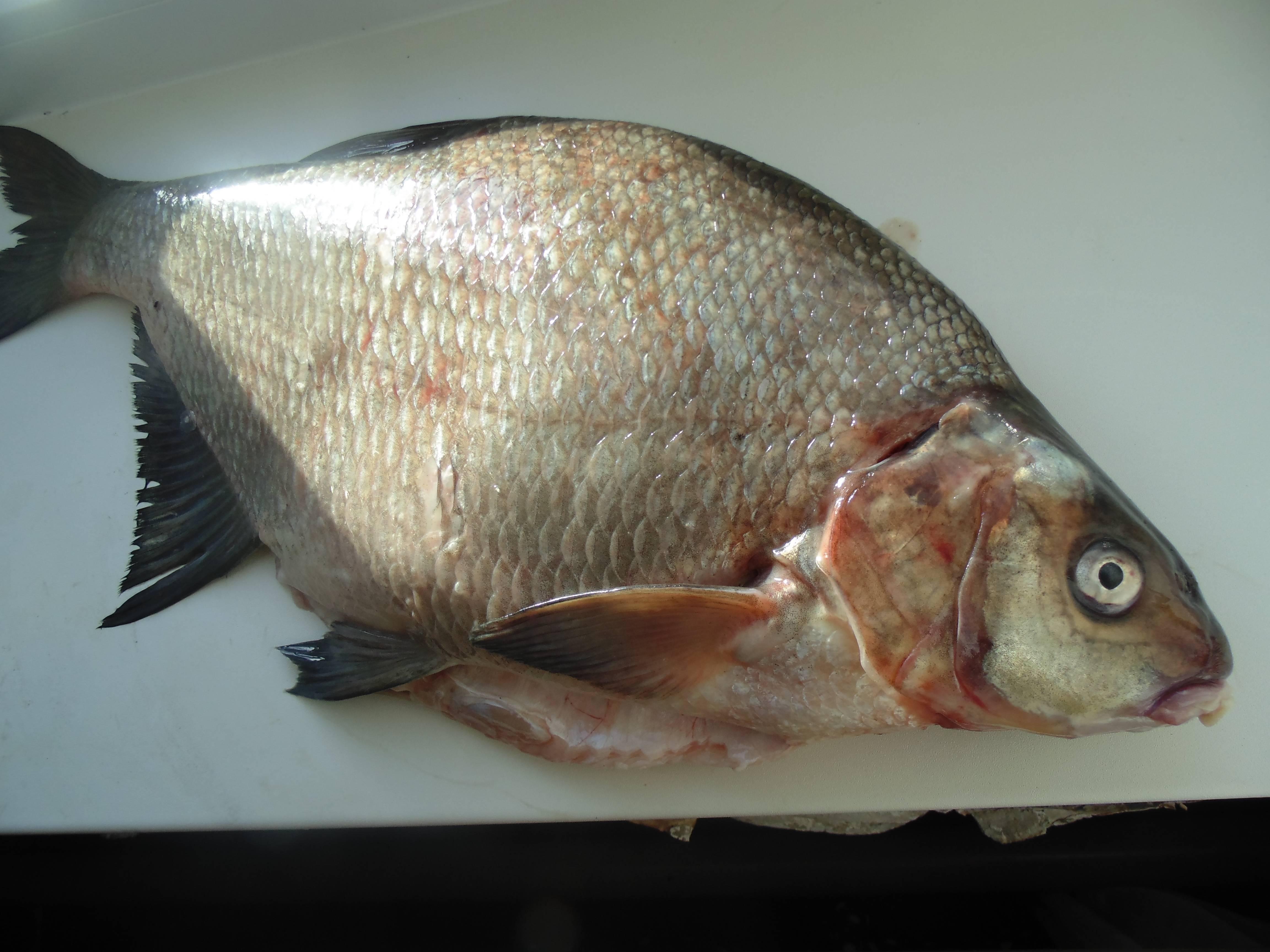 Морская иречная рыба без костей