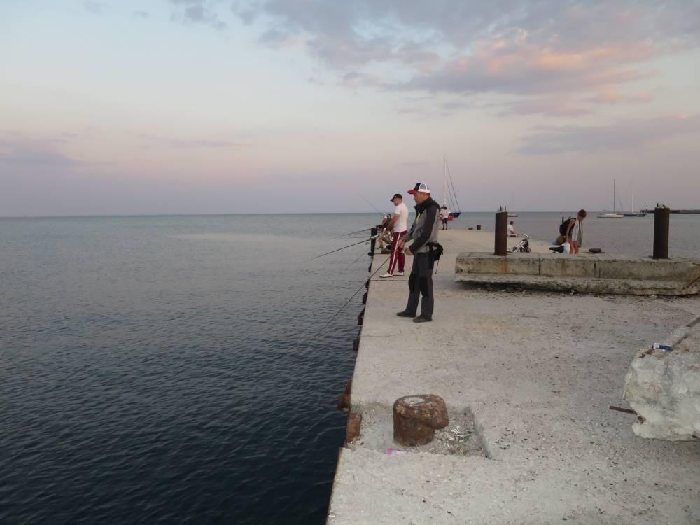 Рыбалка на черном море с берега: какую рыбу можно ловить на море