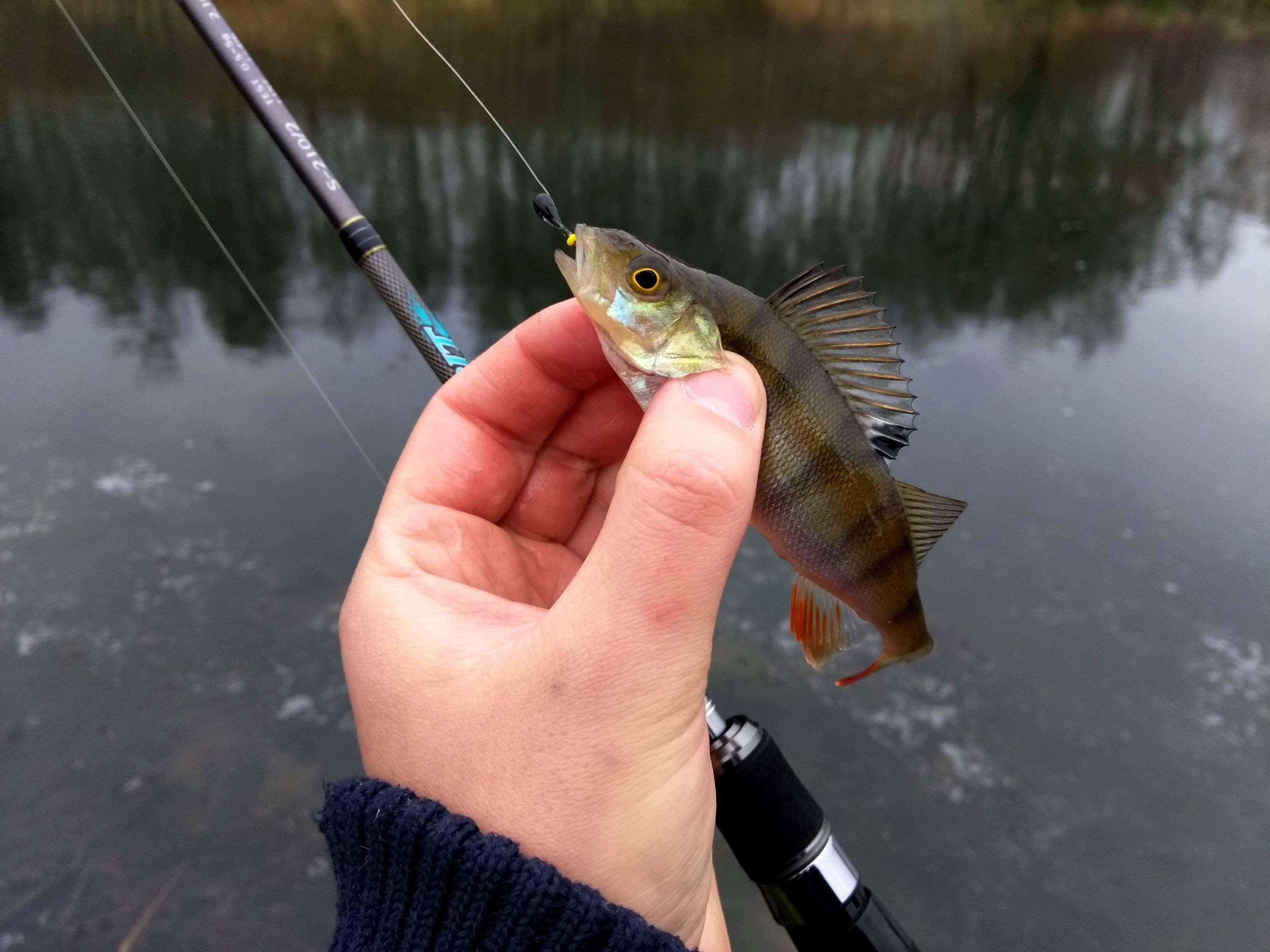 Блог сергея балашова. джиг на малой реке: моя любимая оснастка. 5 февраля 2019 г. рыболовный блог