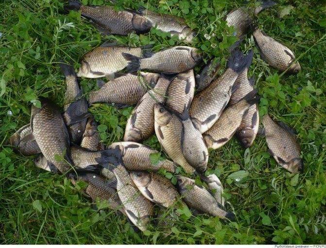 Рыбалка в белозерске в беларуси