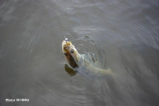 Рыбалка на оке в серпуховском районе - самые рыболовные места на реке ока