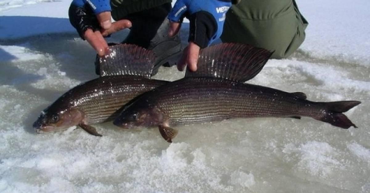 Рыбалка на озере байкал