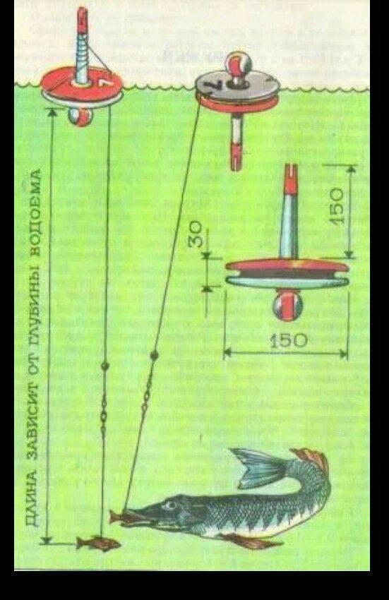 Ловля щуки на кружки: как его сделать своими руками, правильно оснастить и поставить, техника и тактика ловли