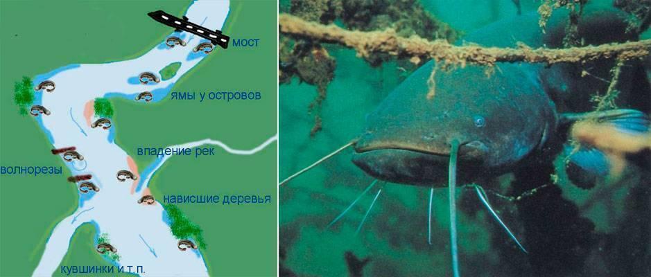 Ловля сома в днепре: рыбные места и базы | ribakov.net