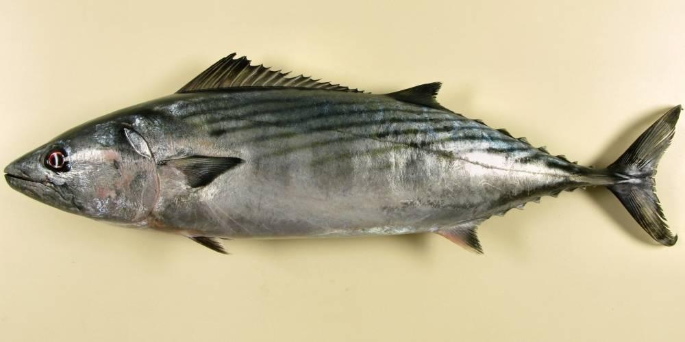 Солянка рыбная по-домашнему из пеламиды – кулинарный рецепт
