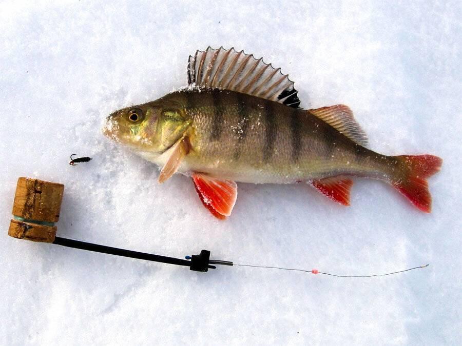 Блесна на окуня для зимней рыбалки, топ 10 блесен