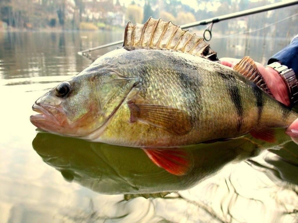 Модная рыбка— гарантия большого улова!