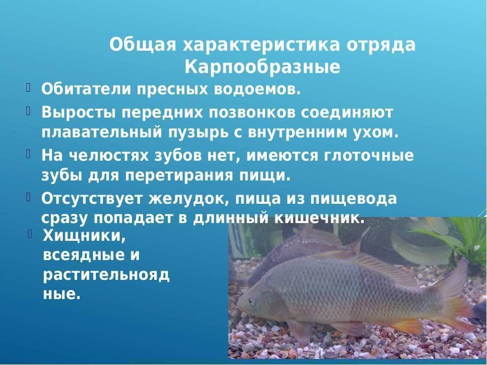Болезни аквариумных рыб: основные болезни и их лечение. внешние признаки и проявления заболеваний (75 фото)