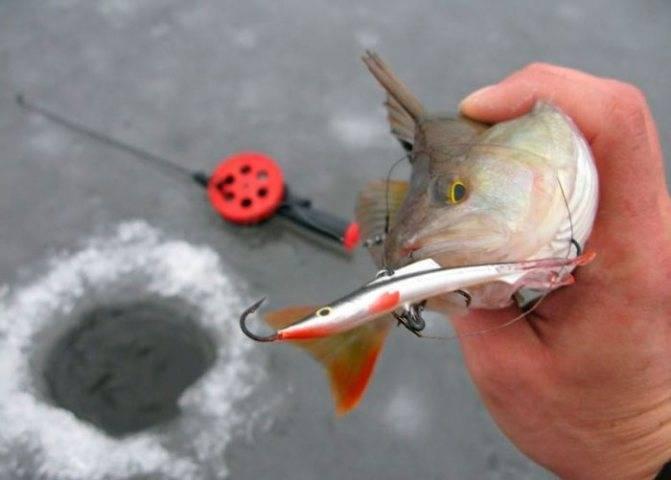 Ловля окуня на балансир. зимняя рыбалка на окуня :: syl.ru