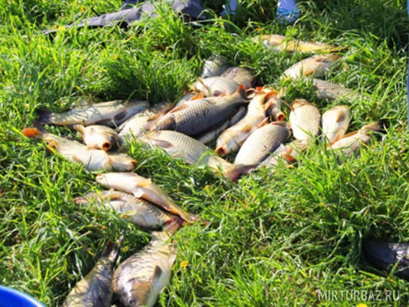 Клинский рыбхоз, участок «дятлово» — платный водоем