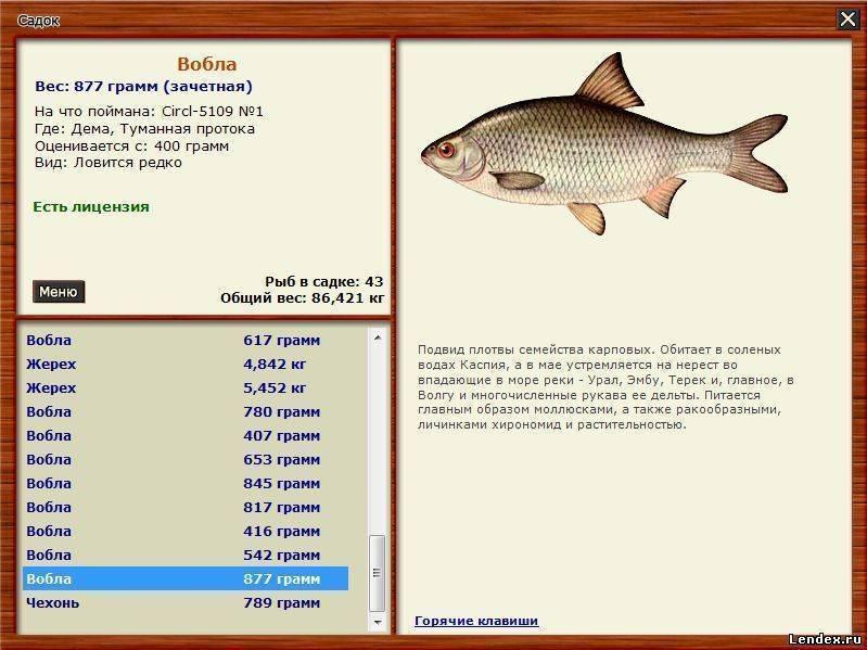 Какая рыба водится в волге: список названий, рекомендации по ловле