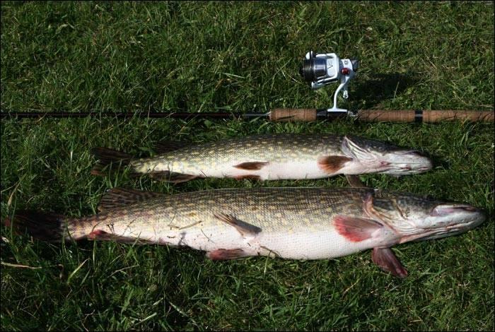 В какое время лучше ловить щуку: утром, днём, вечером или ночью, почему не клюёт, приметы - vobler club - клуб любителей рыбалки