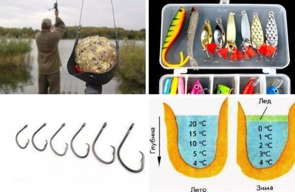 Ловля сазана на дону – суперулов – интернет-портал о рыбалке