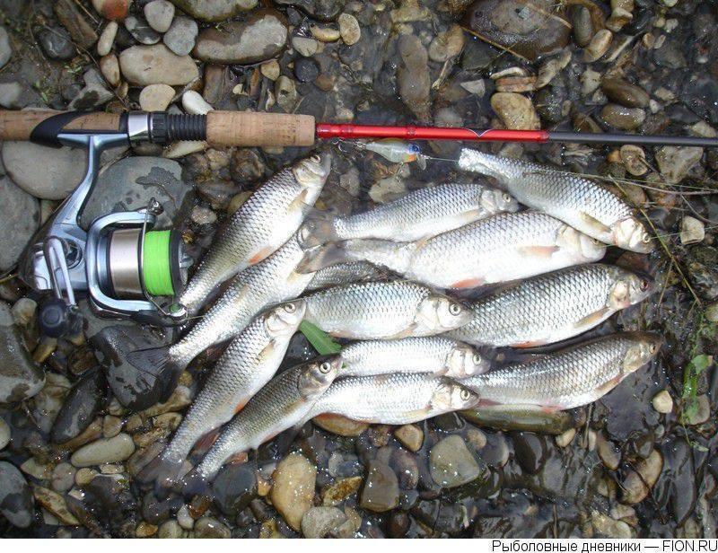 Места для рыбалки в республике мордовия – платная и бесплатная рыбалка!