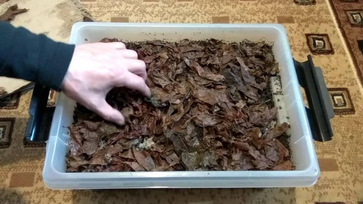 Разведение червей в домашних условиях: инструкция для начинающих