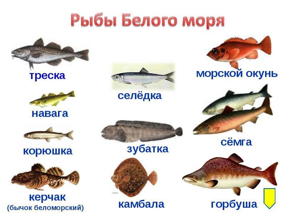 Разновидности плоской рыбы, виды круглой рыбы, их характерные особенности