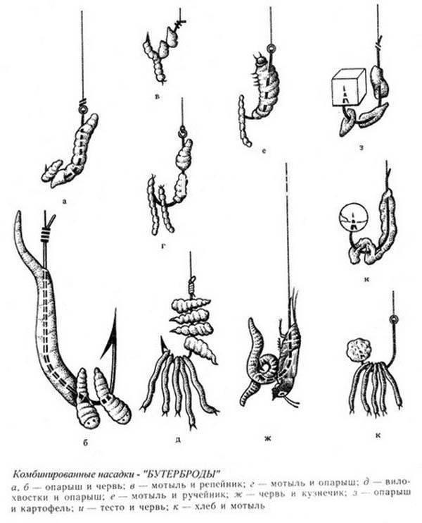 Как насадить мотыля на крючок: способы, добыча и хранения наживки