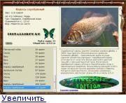 Ловля серебряного карася - охота и рыбалка, животные, туризм