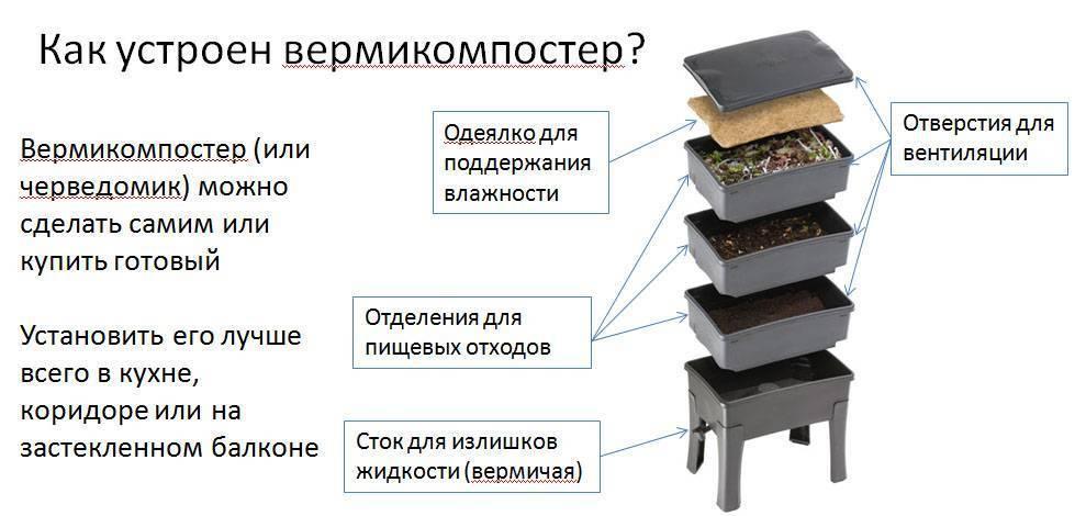 Навозный червь: разведение в домашних условиях для рыбалки