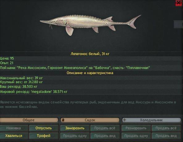 Рыба лопатонос: описание, фото