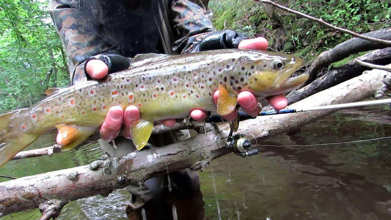 Рыба судак (морская и речная): где водится, описание, образ жизни, техника ловли