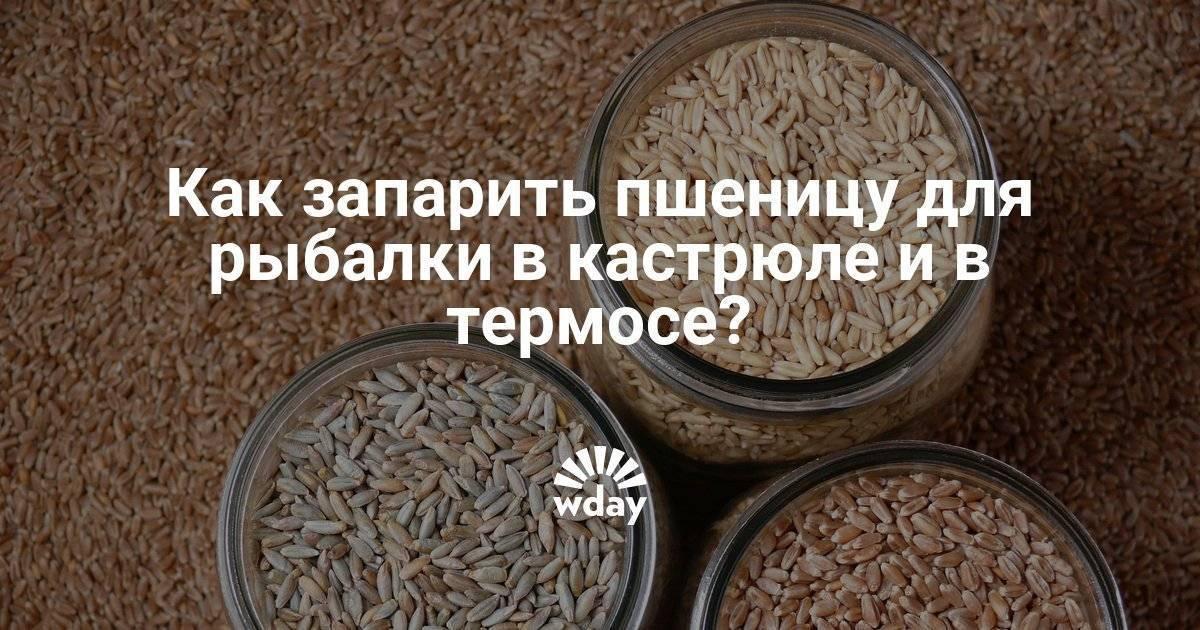 Пшеница для рыбалки – как правильно приготовить