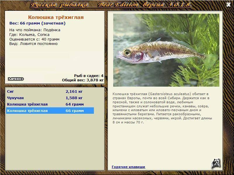 Трехиглая колюшка — интересные факты о рыбе