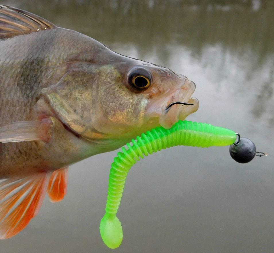 Твистеры на щуку - лучшие приманки, рекомендации по выбору силикона и ловле хищницы