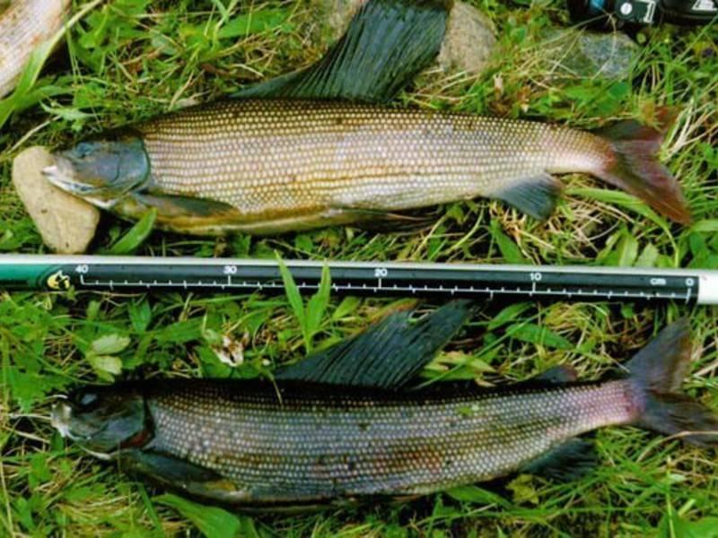 Рыбные места в красноярске и красноярской области
