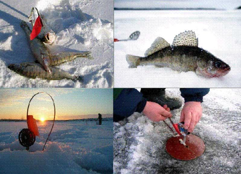 Ловля щуки на жерлицы зимой от а до я