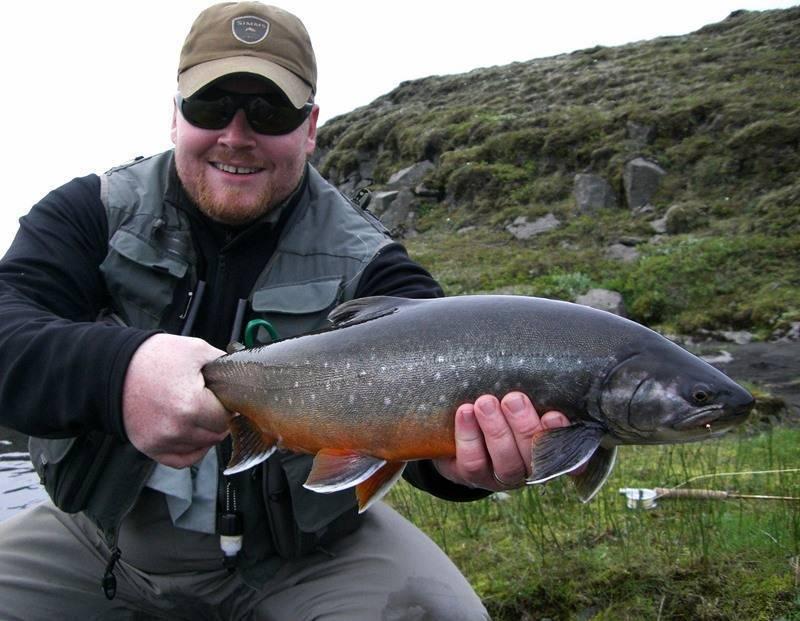 Голец рыба. образ жизни и среда обитания рыбы голец