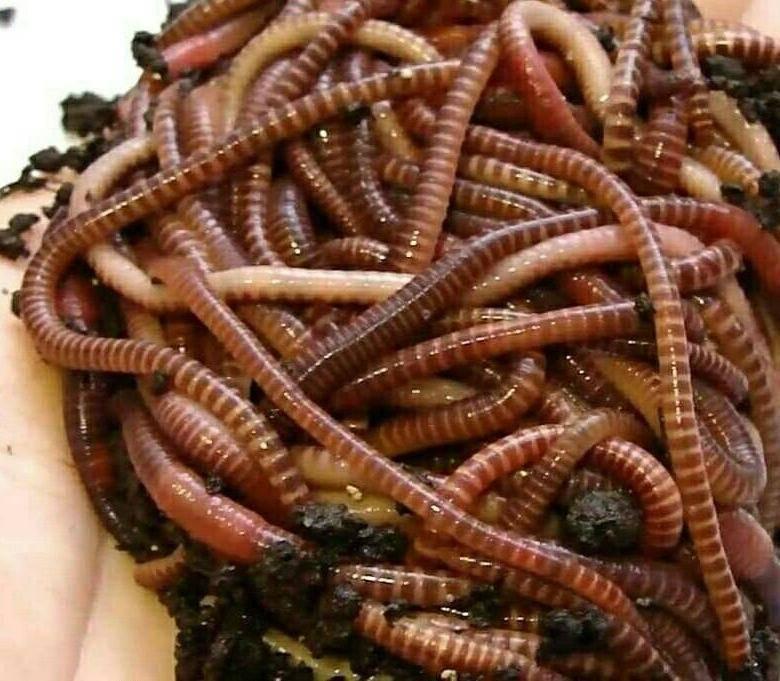 Где и как накопать червей разных видов.