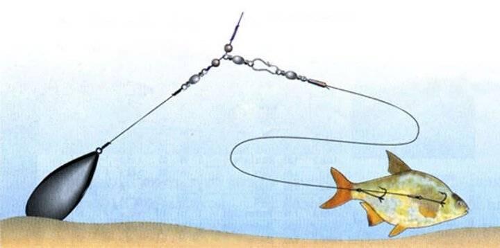 Как ловить судака на живца?