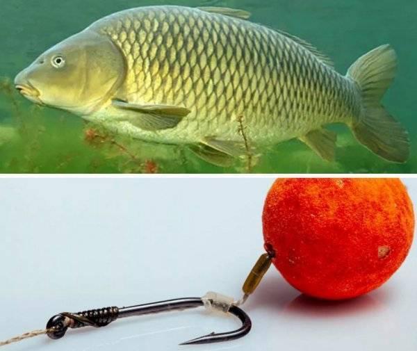 Бойлы для ловли рыбы