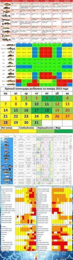 Календарь рыболова на 2020 год по месяцам и дням: выбор благоприятных дней, влияние климатических условий и советы рыболовов – сад и огород своими руками