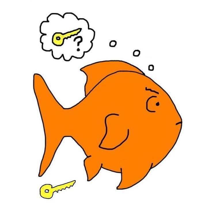 Память рыбы – три секунды или больше? : labuda.blog память рыбы – три секунды или больше? — «лабуда» информационно-развлекательный интернет журнал