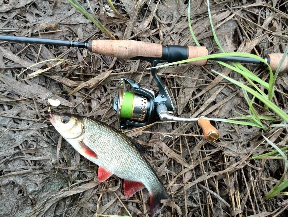 Как и на что ловить голавля осенью разными способами