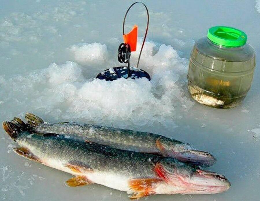 Ловля щуки зимой со льда