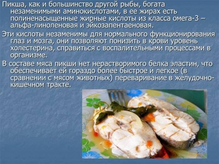 Основная информация о красной рыбе кижуч: где обитает, польза и вред, рецепты приготовления