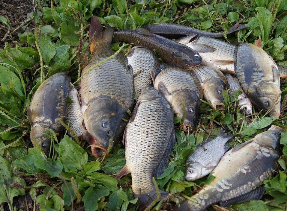 Рыбалка в воронеже и воронежской области: платная рыбалка в местах «дальний раг» и «липов лог», бесплатные пруды и реки на карте