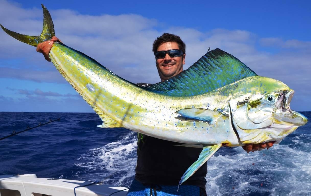 Ловля дорадо: приманки, места и способы ловли рыбы