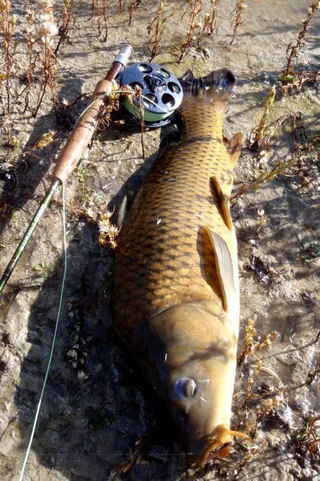 Ловля толстолобика: как поймать и на какую удочку его ловить
