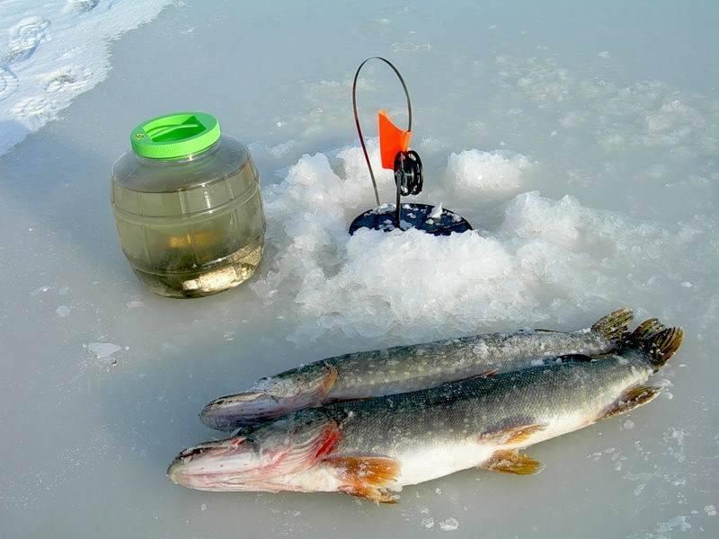 Зимняя ловля щуки на жерлицы: подбор оснастки, установка и поиск места