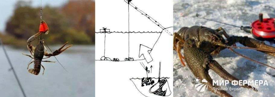 Как ловить раков: видео, лучшие способы и приспособления, можно ли ловить руками