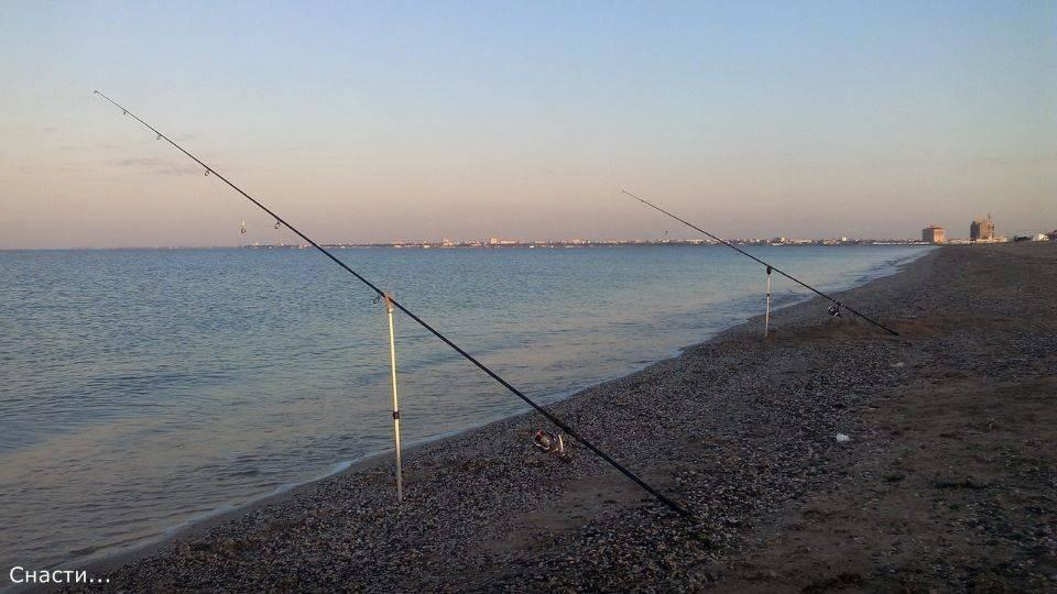 Рыбалка на черном море с берега — виды рыб и снасти для ловли